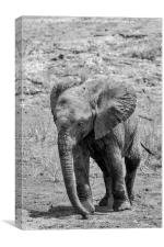 Elephant Calf, Canvas Print
