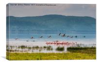 Flamingos on Lake Nakuru, Canvas Print