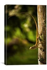 Lizard ready to jump..., Canvas Print
