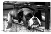 Boxer Dog On Windowsill, Canvas Print