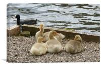 Four Goslings are Resting Here, Canvas Print