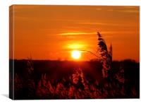 REED SUNSET, Canvas Print