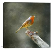 Little Red, Canvas Print