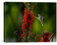 Humminngbird and Red Flower, Canvas Print