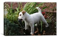 Jack Russell Pup Gardening, Canvas Print
