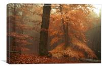 Silence In Misty Woods, Canvas Print