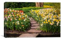 Colorful World of Keukenhof. Tiled Path through Fl, Canvas Print