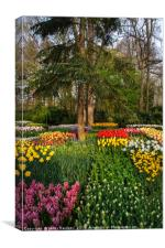 Colorful Floral Patches in Keukenhof, Canvas Print