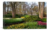 Spring Blooms in Keukenhof, Canvas Print