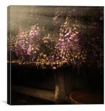 Wisteria Memories, Canvas Print