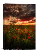 Parade of Poppies, Canvas Print