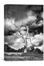 Dead Tree and a Moody Sky in Mono, Canvas Print