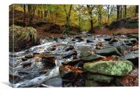 Autumnal colours in Roddlesworth - Tockholes woods, Canvas Print
