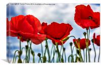 Poppy Art, Canvas Print