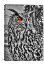 Long Eared Owl (Black and White), Canvas Print