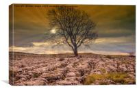 Lonely Tree above Malham, Canvas Print