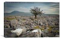 Lone tree and Ingleborough, Canvas Print