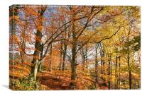 Autumn Colour in Derbyshire, Canvas Print