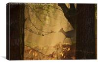 New Forest Sika Deer, Canvas Print