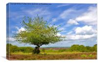 New Forest Spring, Canvas Print