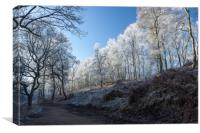Winter on Cannock Chase, Canvas Print