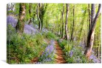 Bluebell Woods in Cornwall, Canvas Print
