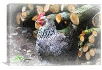 Chicken by the Woodpile, Canvas Print