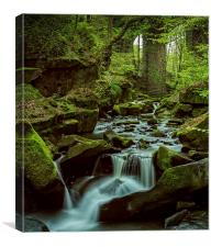 Healey Dell, Canvas Print