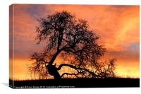 Tree With Sky On Fire, Canvas Print