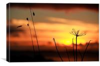 Grass In The Sunset, Canvas Print