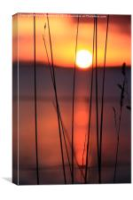 Tall Grass In Sunset, Canvas Print