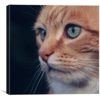 Beautiful Ginger Cat, Canvas Print