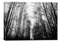 An avenue of trees in winter - landscape, Canvas Print