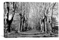 St George Park, Canvas Print