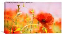 Poppy in Focus, Canvas Print