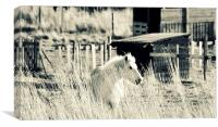 Black and White Beauty, Canvas Print
