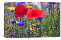 Red Poppies in meadow, Canvas Print