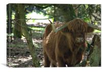 Highland cattle of Hindhead, Canvas Print