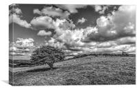 Solitary Downland Tree, Canvas Print