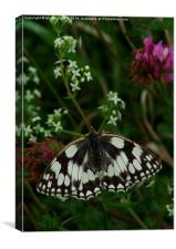 Marbled White Butterfly, Canvas Print