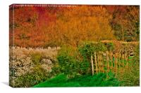 Spring Woodland in Yorkshire, Canvas Print