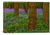 Woodland Bluebells in Spring, Canvas Print