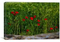 Poppies Corn and Wood, Canvas Print