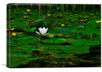 The Lilly Pond, Canvas Print