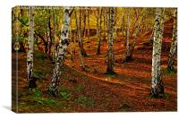 Silver Birch Woodland in Autumn, Canvas Print