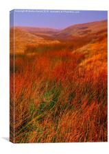 Moorland Grass in the Yorkshire Dales, Canvas Print