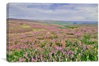 Heather Moorland - Weardale, Canvas Print