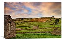 Swaledale Stone Barns and Walls, Canvas Print