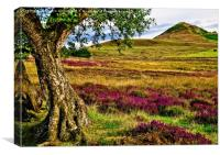 Heather on the North Yorkshire Moors, Canvas Print