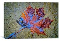 Frozen Leaf on Stone, Canvas Print